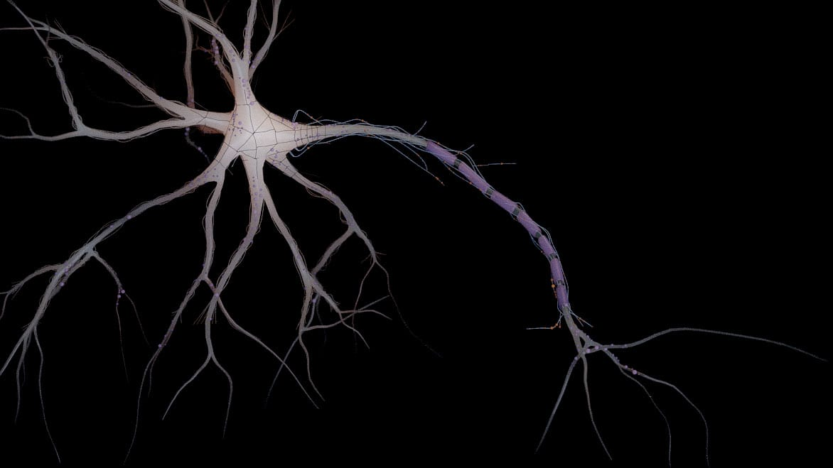 Render-3d-dibujo-medico-neuronal