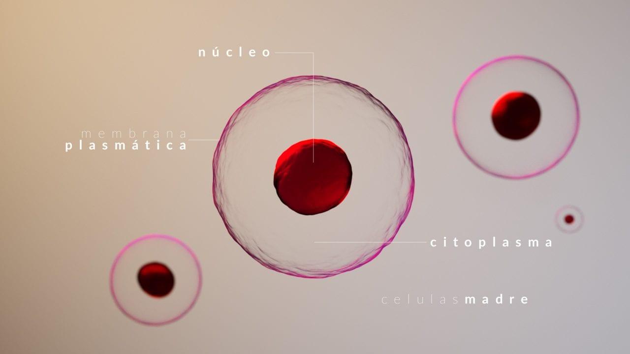 render-3d-celulas-dibujos-medicos